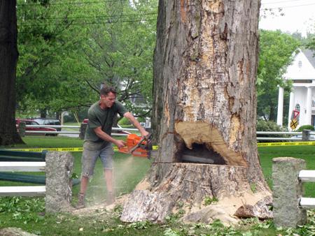 Treecut5