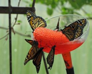 Butterflydrink