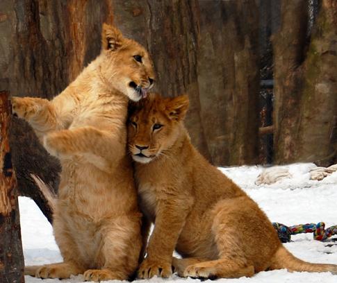 Southwick Zoo photo